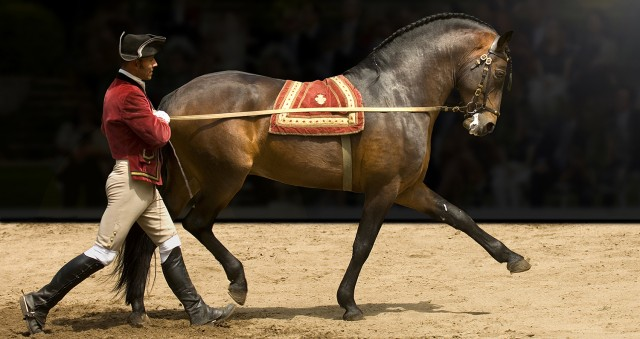 caballo lusitano sintra